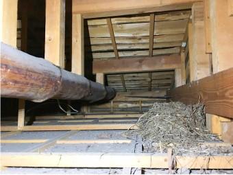 小屋裏に作られた鳥の巣