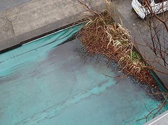 防水危険信号:植物の繁殖