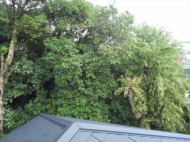 松原市で住宅の軒樋に落葉が詰まって困っているとの連絡が有り現地調査