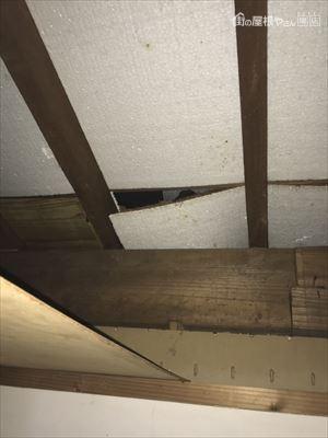 天井裏 雨漏れ