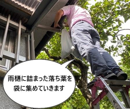 軒樋の落ち葉 清掃