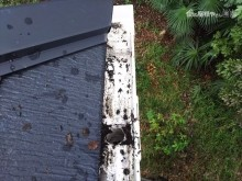 屋根軒樋落葉取り除き状況