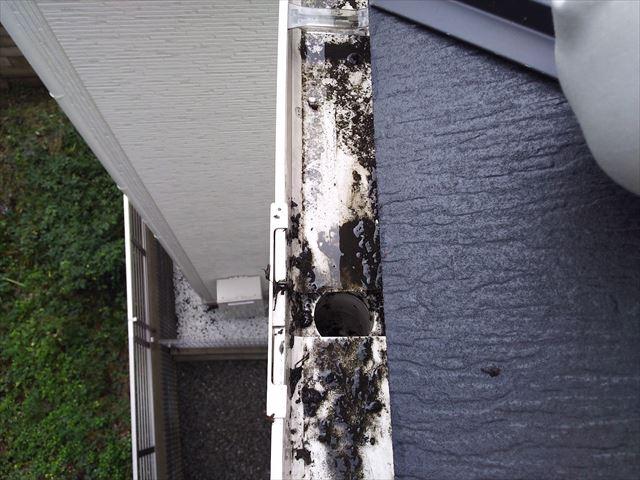 屋根軒樋落葉取り除き完了