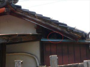 下屋・大屋根間のネコ対策