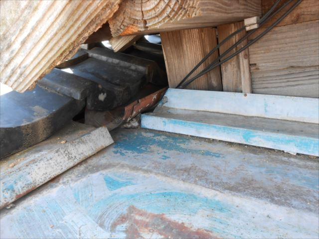 屋根板金奥・猫侵入