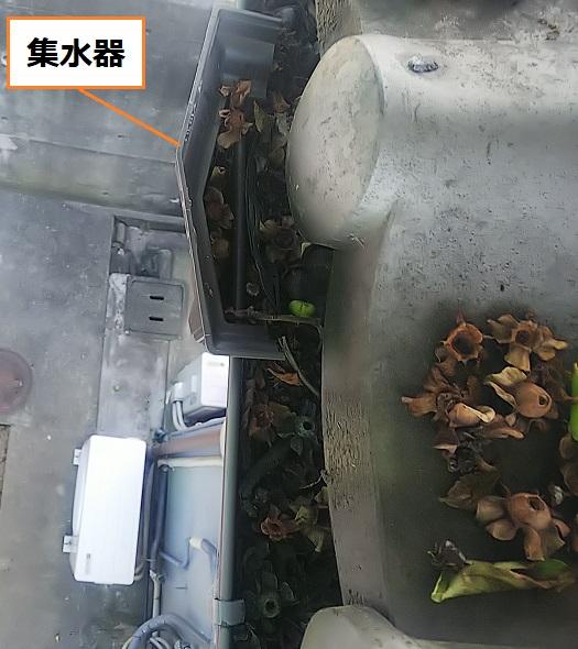 集水器 軒樋に落ち葉が詰まっている
