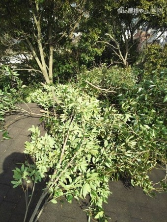 屋根干渉木枝伐採