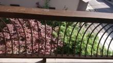手すり塗装現状と植栽